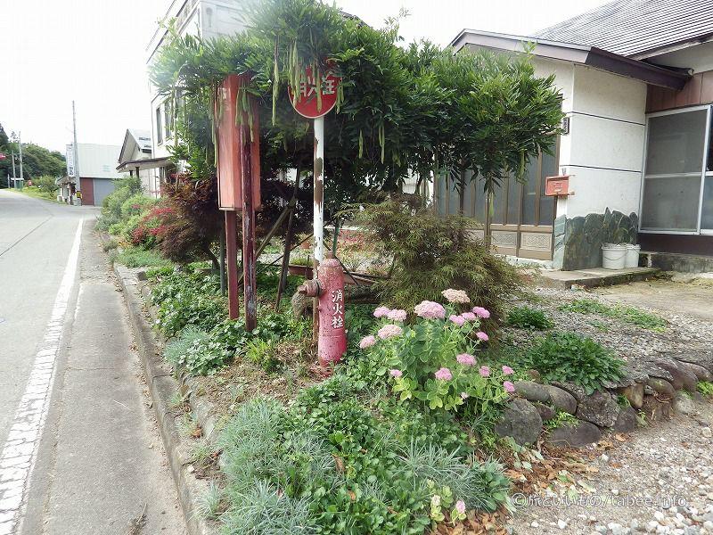 キヨコさんの庭