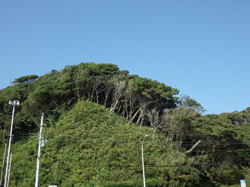 岩の上の植物