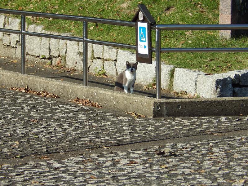 観音崎公園の猫