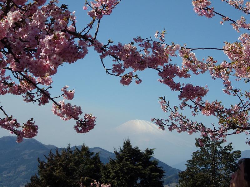 松田山のシャトルバス停留場から富士山を眺める