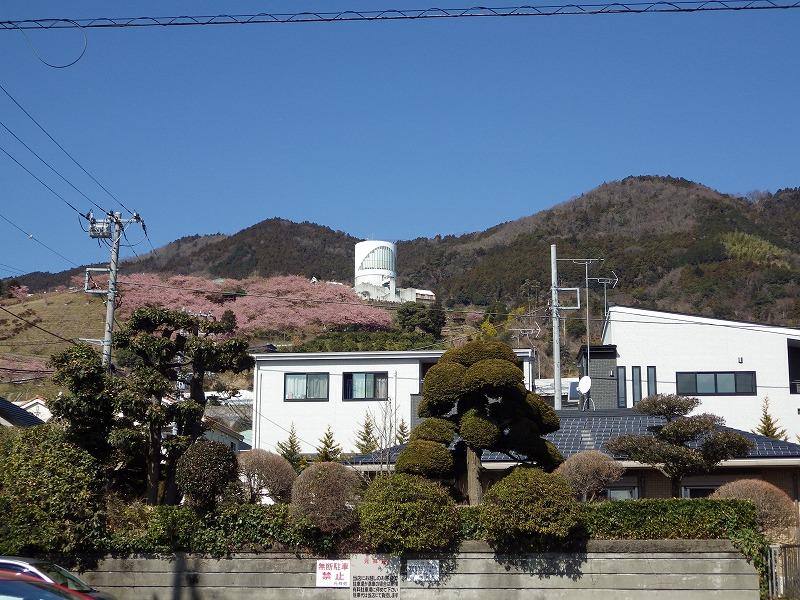 松田山のハーブガーデンを眺める