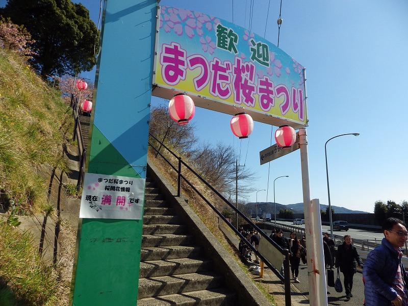 桜まつりの看板