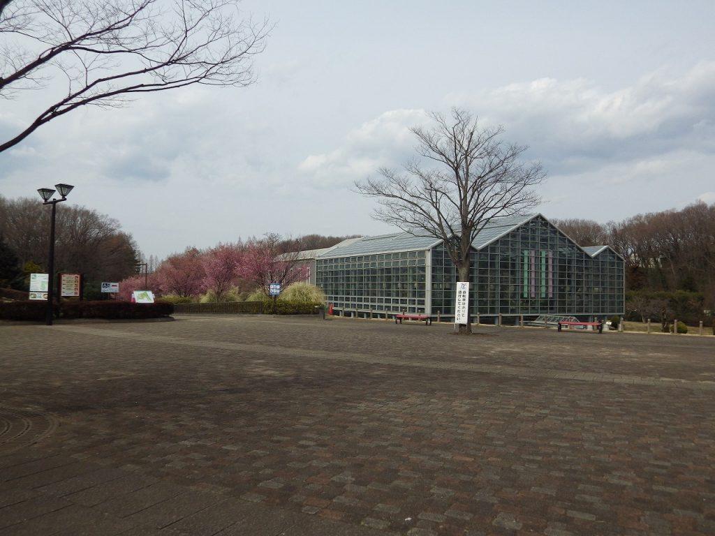サカタのタネグリーンハウスが見えてきました。
