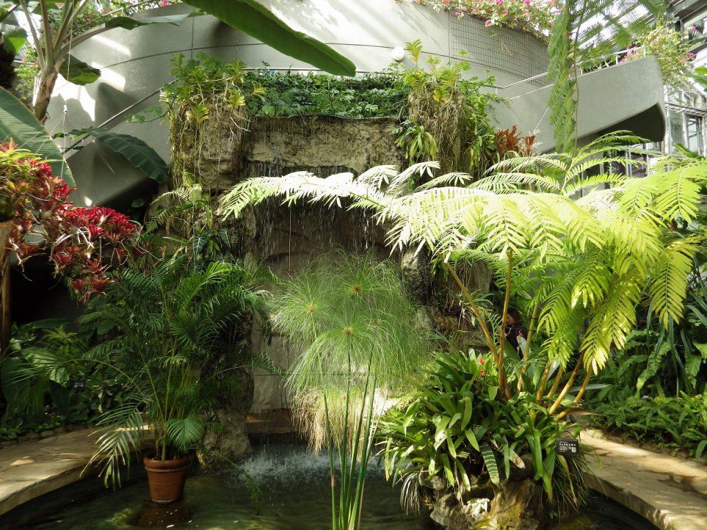 熱帯植物の数々