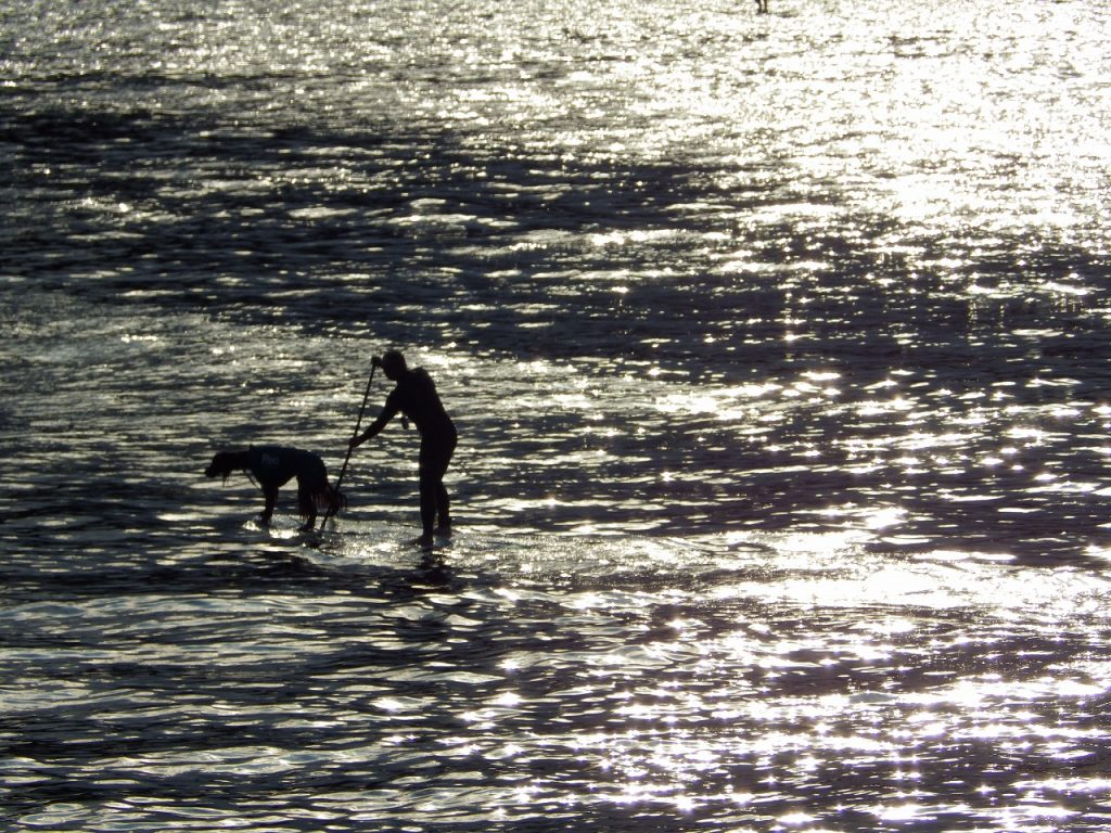 愛犬と一緒のパドルサーフィン