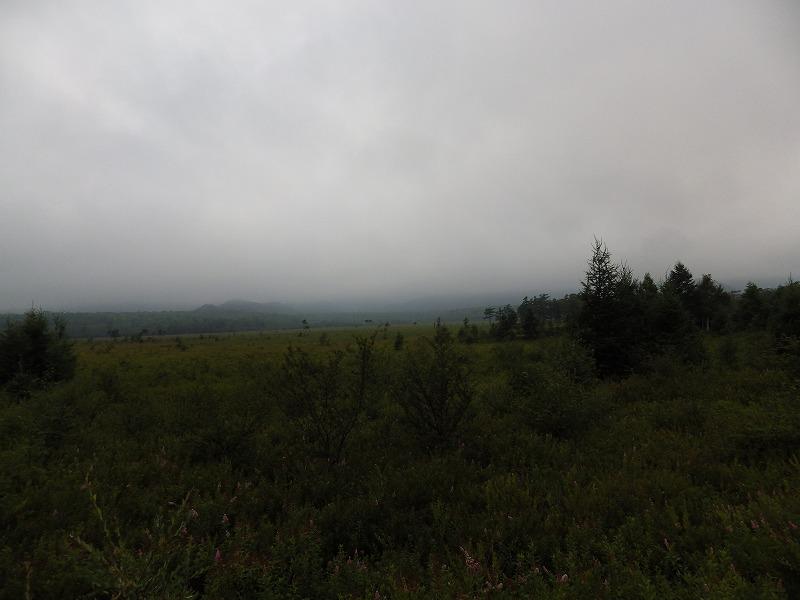 戦場ヶ原湿原