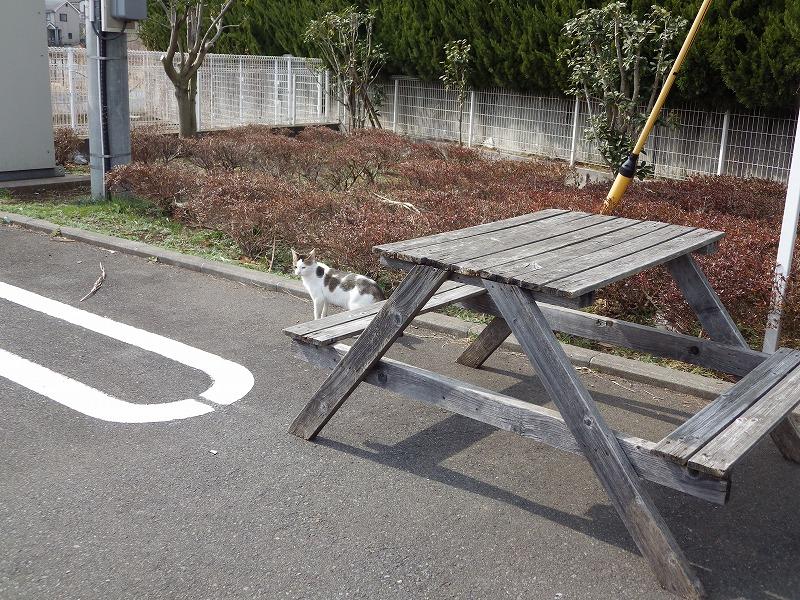 せき麺の猫