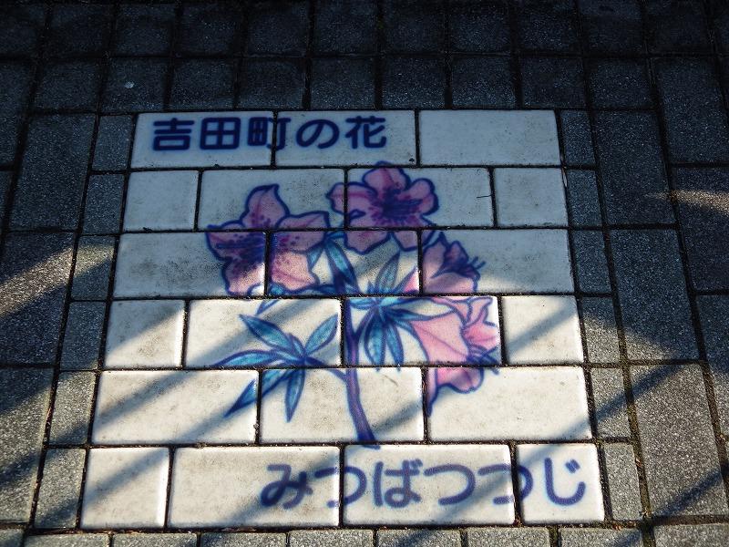 吉田町の花みつばつつじ