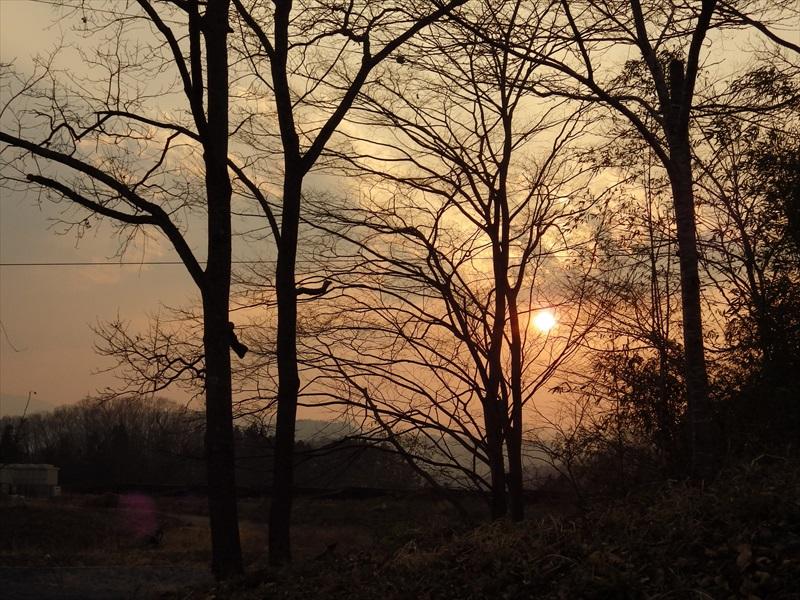 桜の木と夕日