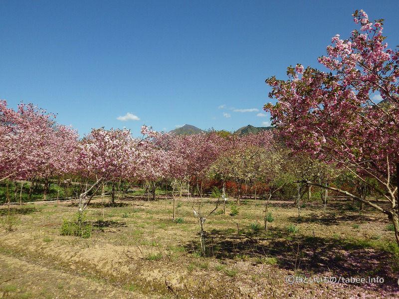 みやまの花園から眺める武甲山