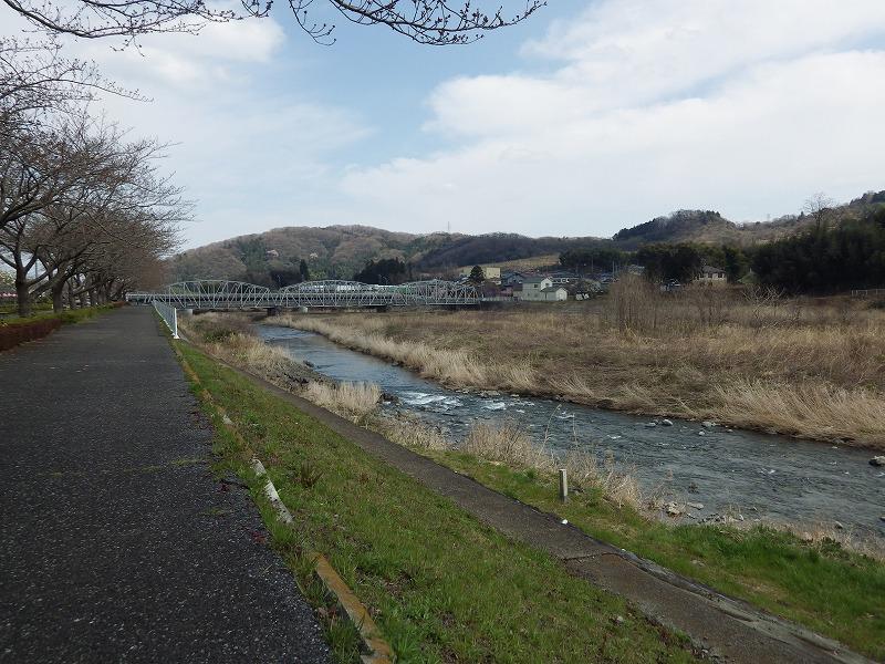 中津川堤防の桜並木