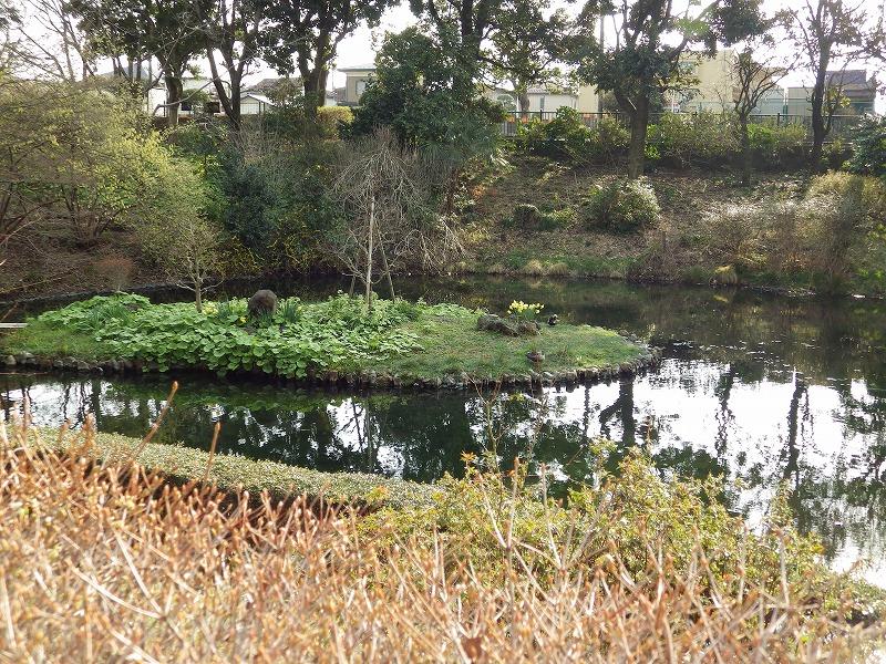 池には鴨や鯉がいます