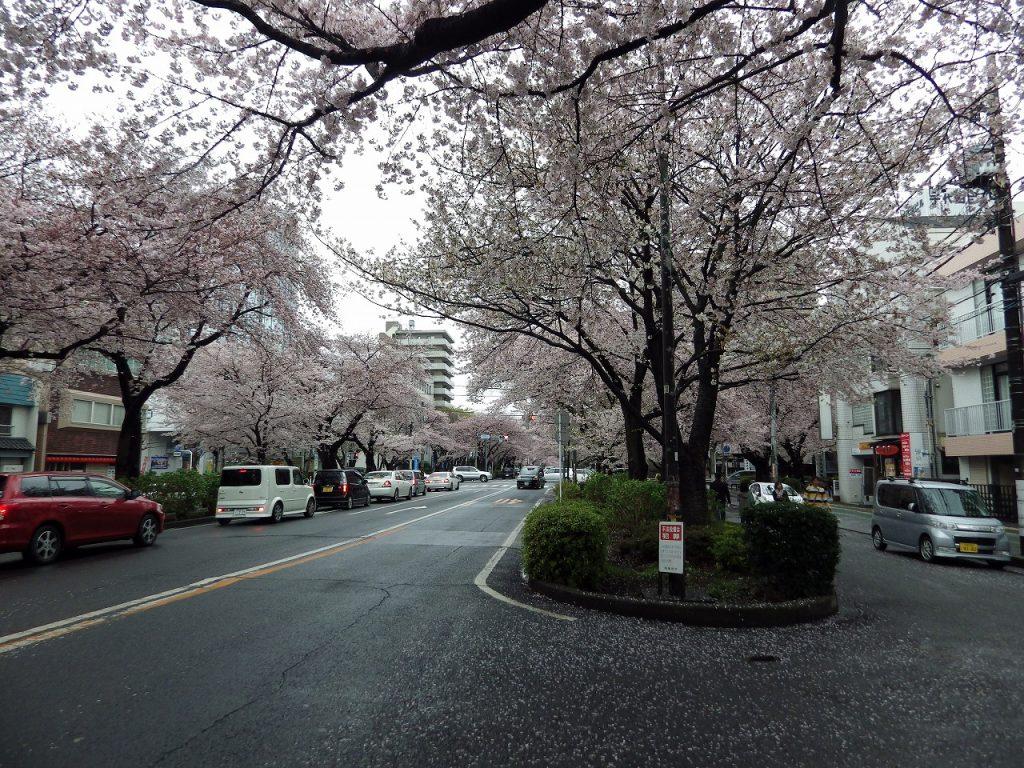 4月9日には花散らしの雨が降りました