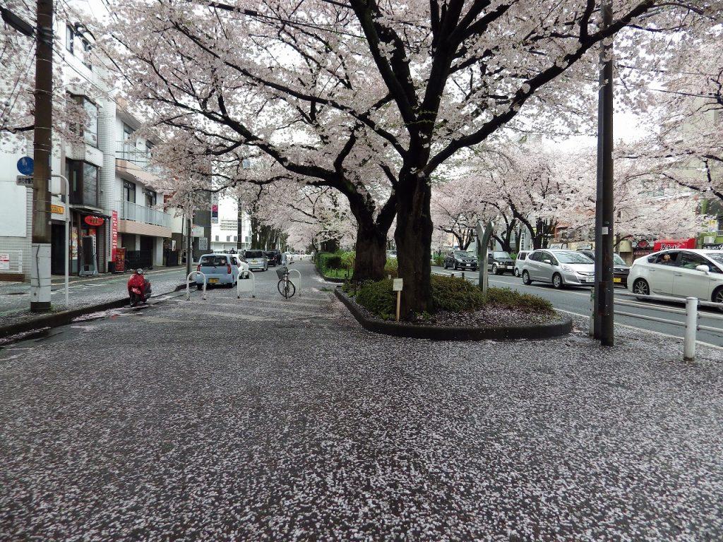 天地が桜色