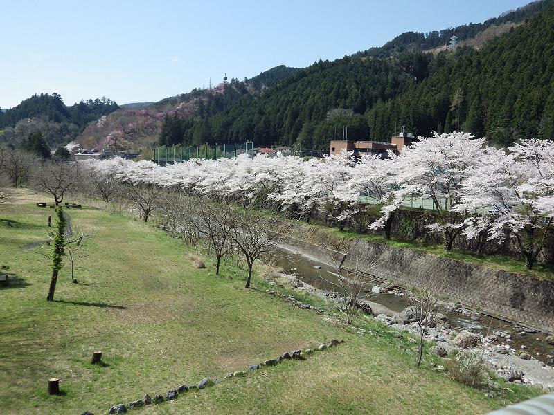 名栗川の桜並木