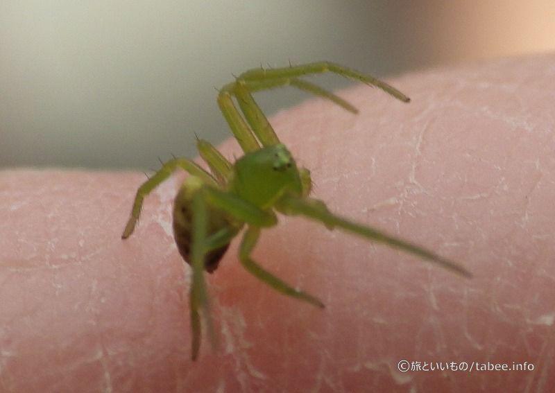 小さな蜘蛛が指に降りてきました