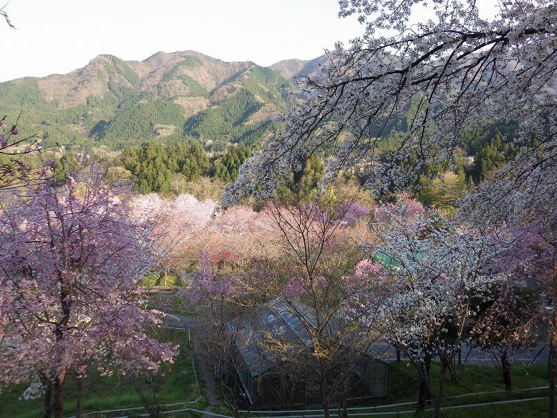 深山の花園