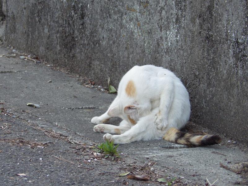 猫が無心で毛づくろいしていました
