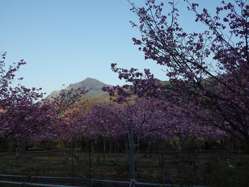 武甲山も見えます