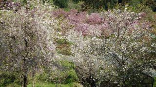 みやまの花園2