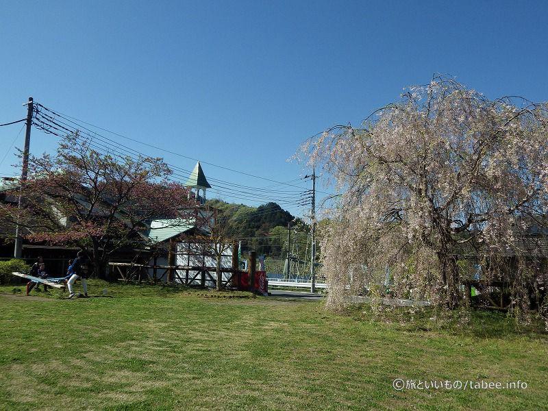 枝垂桜のある公園