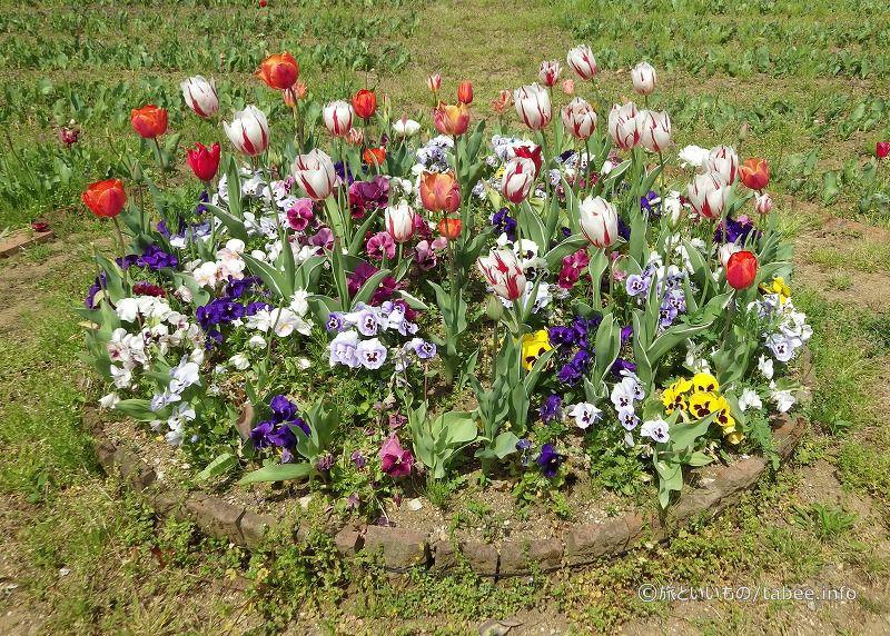 色んな種類の花が植えられていました