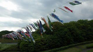 若宮公園鯉のぼり