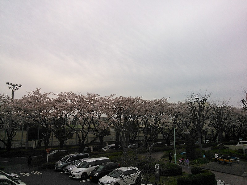 駅から見た桜並木