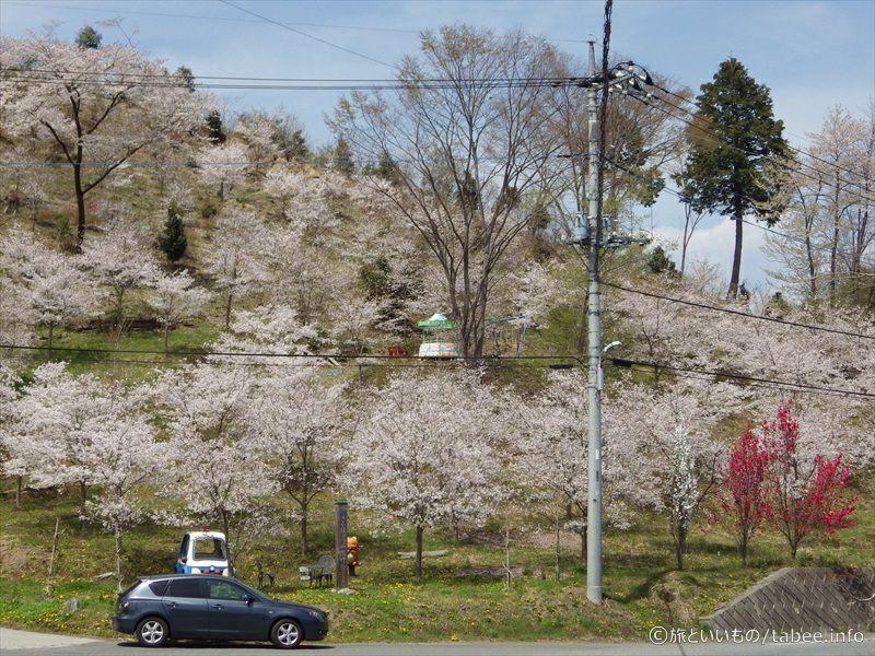 少し離れて見る明光院花見山公園