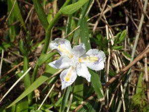 途中で見つけた花1