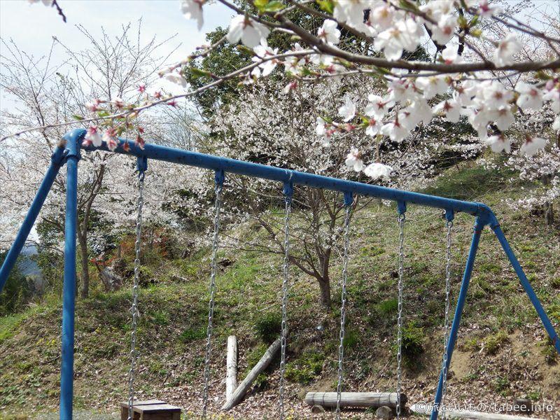 戻ってきたブランコと桜