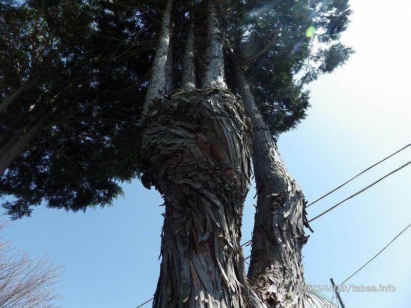 面白い木がありました