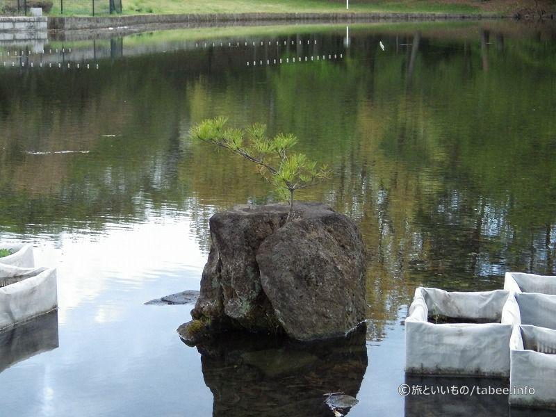 池のそばのベンチはくつろぎ空間でした