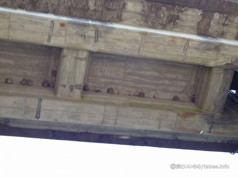 門の天井を見上げると鳥の巣が