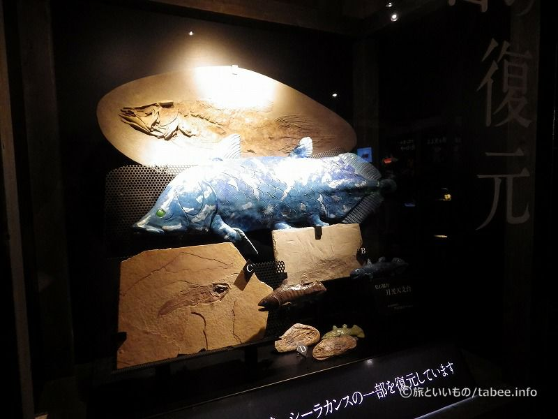 化石と復元