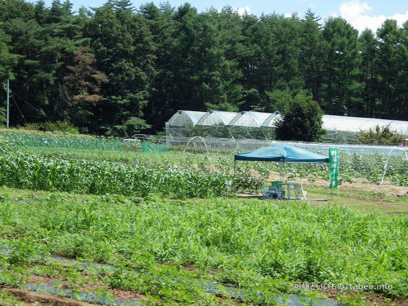 花畑のほかに菜園、果樹園などがあります。