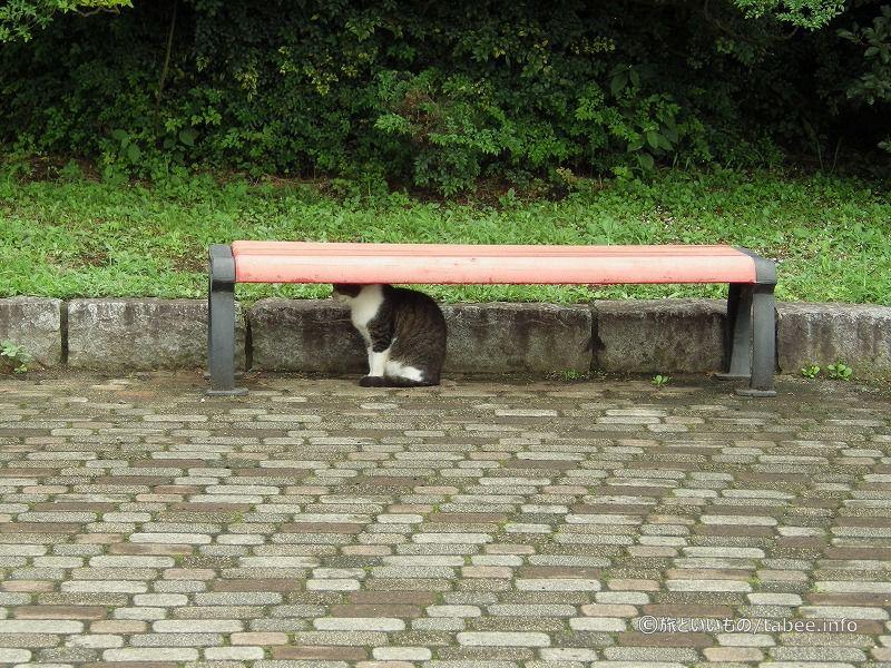 池のそばのベンチで様子をうかがう猫