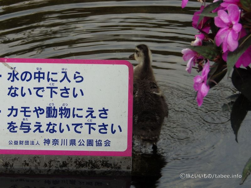 池のプレートを立てているブロック