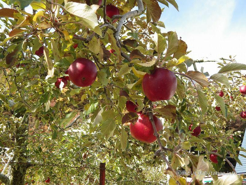りんごは赤くなり
