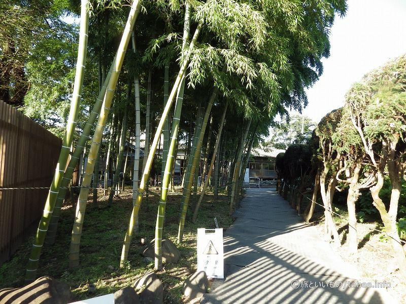 竹林を抜けると、社宅群があります