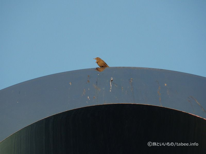 モニュメントの上で休んでいる鳥
