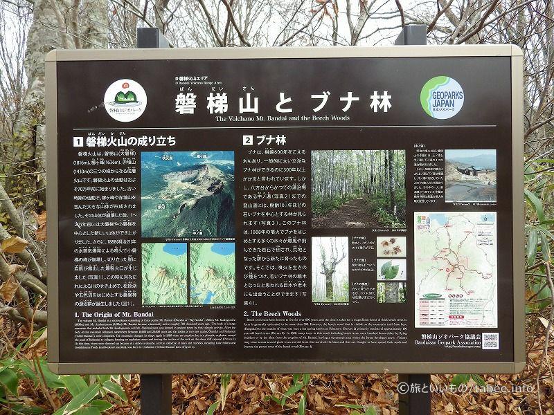 磐梯山とブナ林