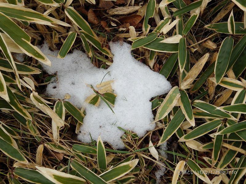雪の痕跡がありました