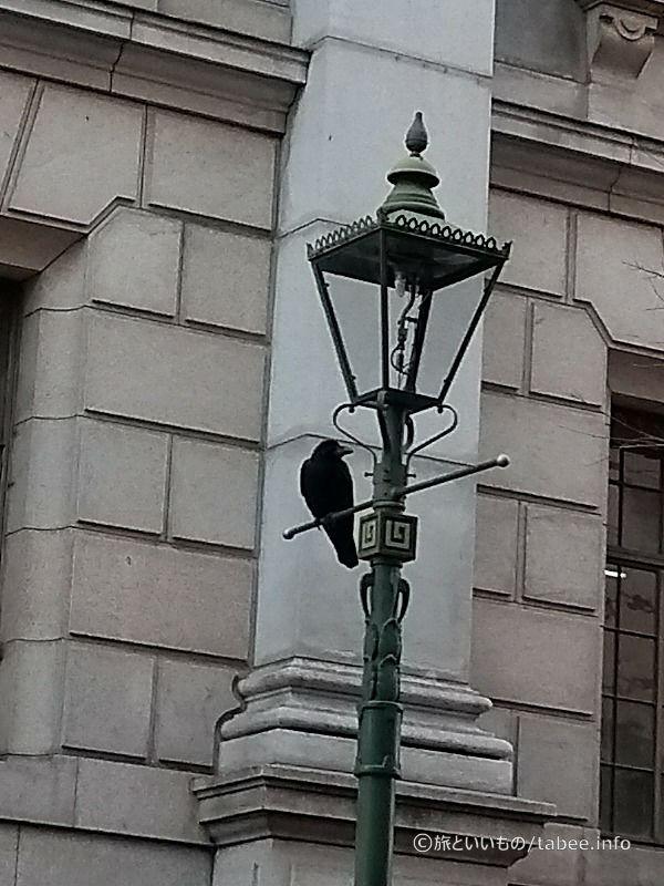 ガス灯とカラス