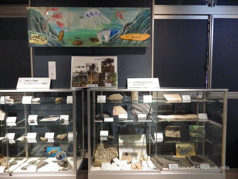 化石の展示