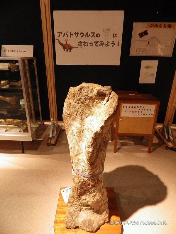 かみなり竜の骨