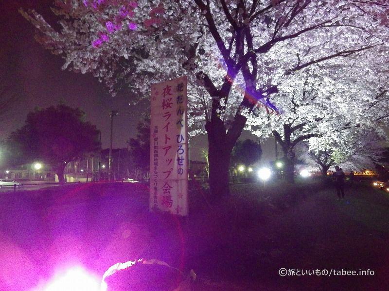 だだんべひろせの夜桜ライトアップ