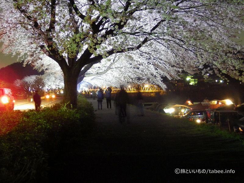 桜を楽しむ人々
