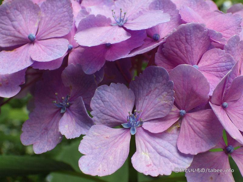 紫と青がエレガント