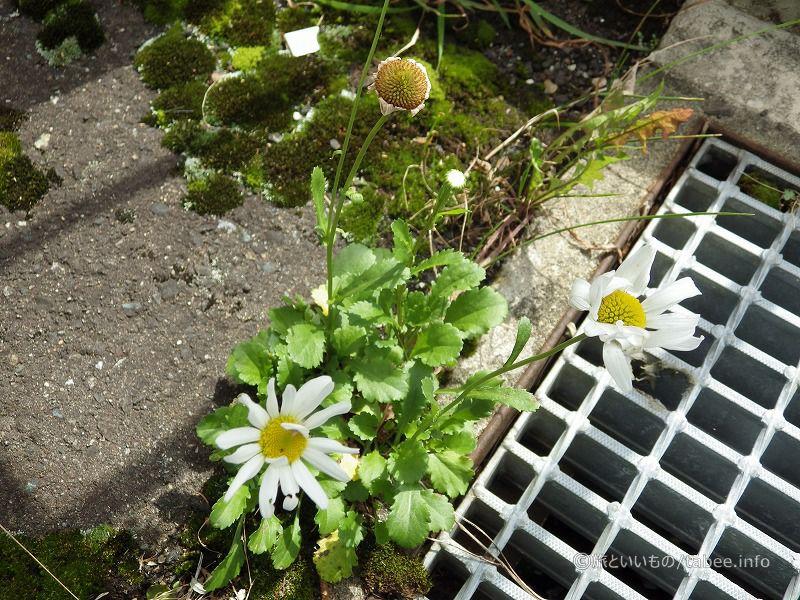 湯田ダムの花